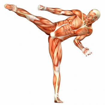 [Muskulatur des Menschen macht Karate-Kick]
