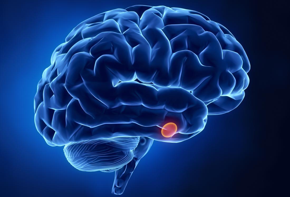 Vị trí của tuyến yên trong não.