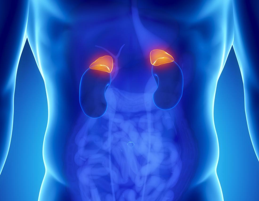Diagramme des glandes surrénales