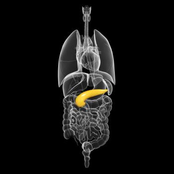 [Жълт панкреас в анатомичния модел]