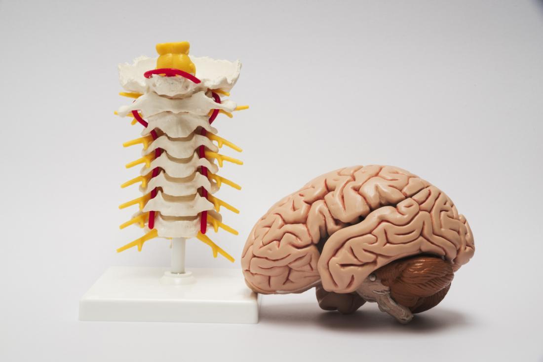 Hệ thống thần kinh trung ương