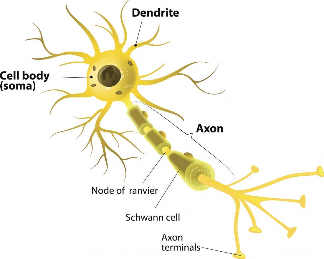 Diagrama neurônio