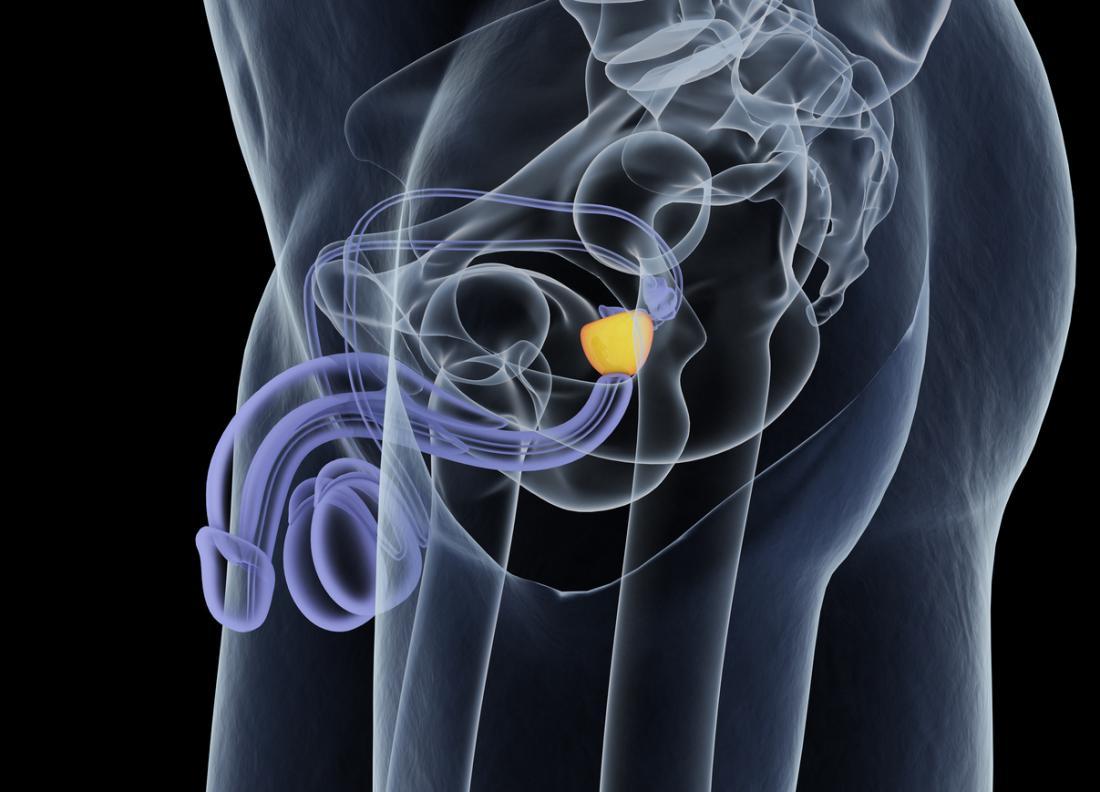 diagramma della prostata