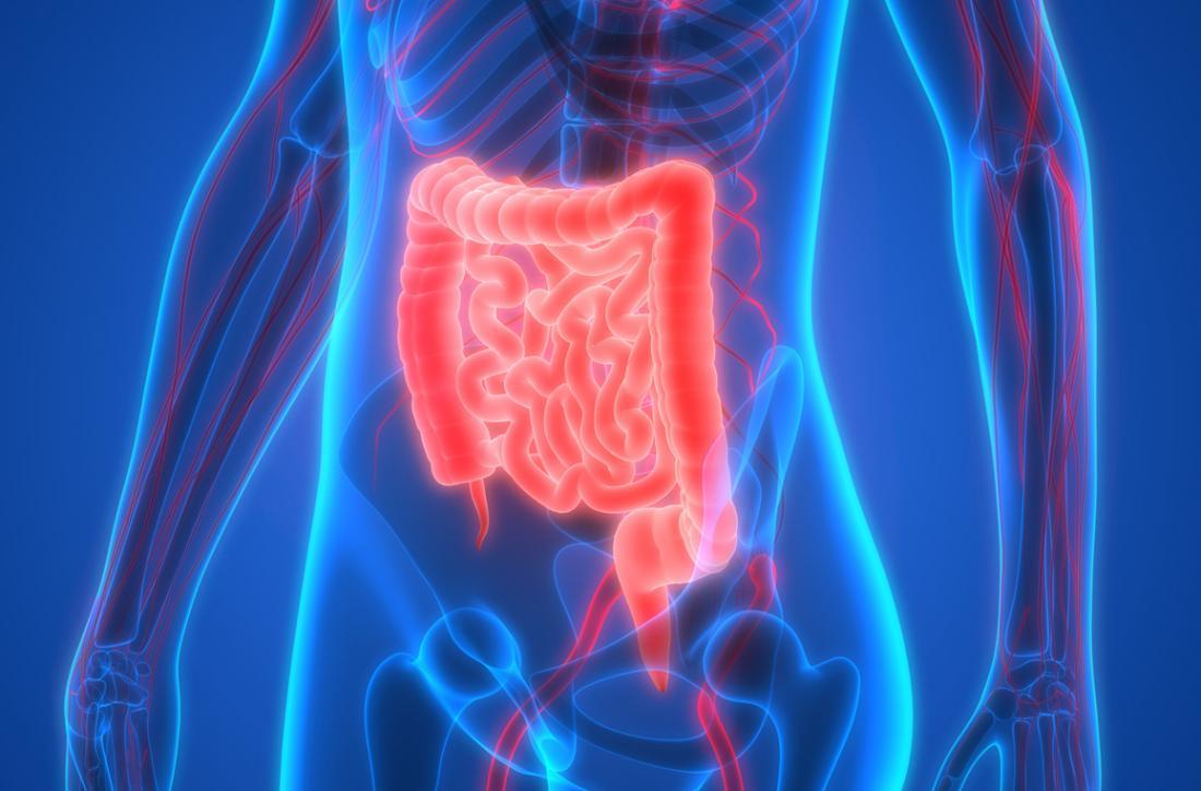 Modello 3D dell'intestino e del sistema digestivo nel corpo umano.