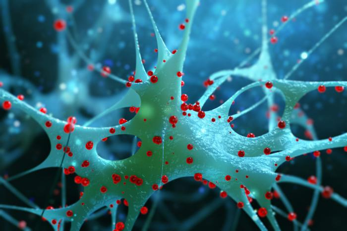 [anatomia microscópica das células nervosas]