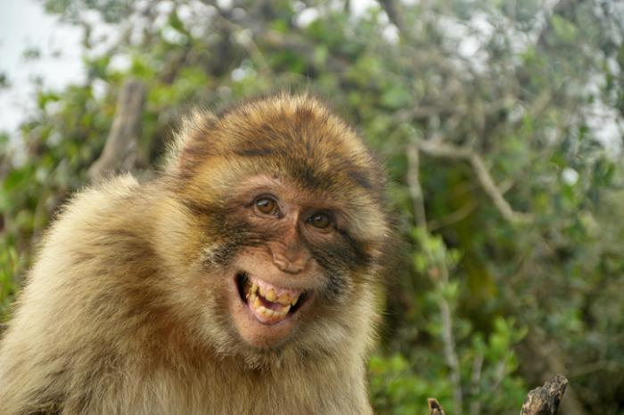 [Маймуна се смее]