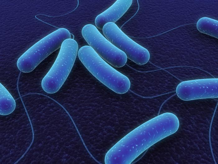 [MI. bakterie coli]