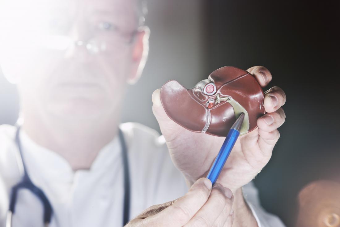 Medico che indica il modello anatomico della cistifellea.