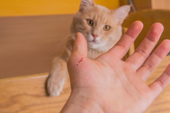 Bir kedi bir el çizdi.