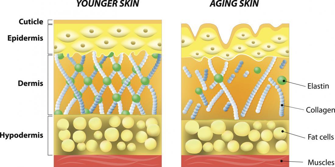 Với tuổi tác, collagen suy yếu, dẫn đến các nếp nhăn và sụn.