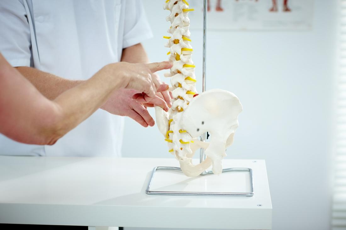 Medico che indica un modello della colonna vertebrale.