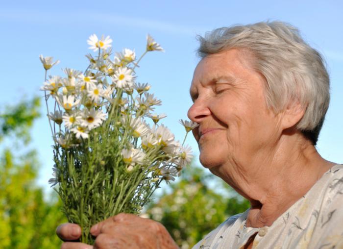 [kıdemli kokulu çiçekler]