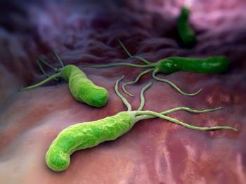 [Helicobacter pylori'nin çizimi]