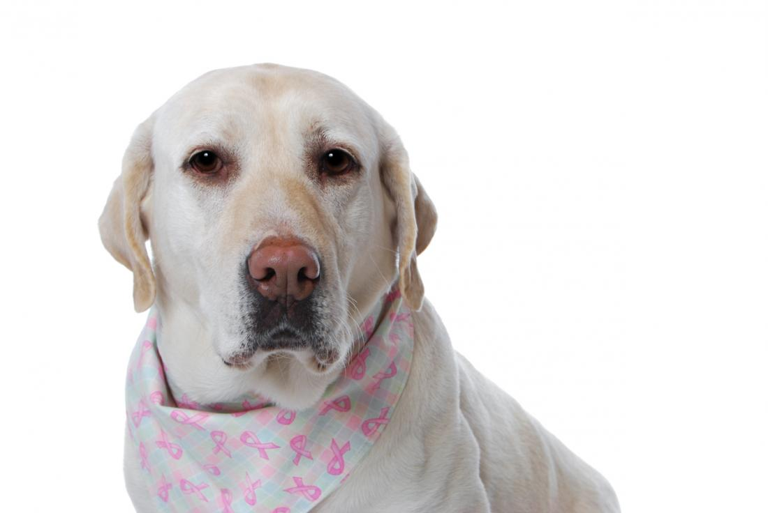 Chó ngửi ung thư