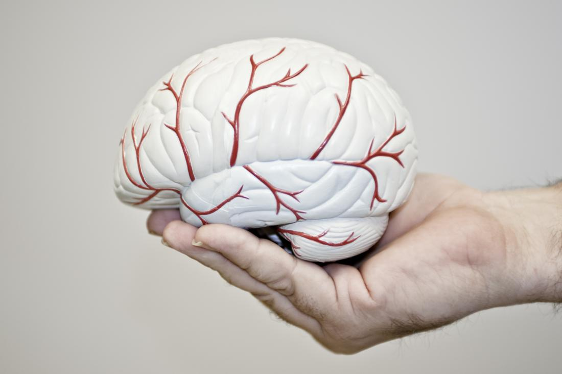 anoxiaを示すために血管を持つ脳のモデルを保持する人。