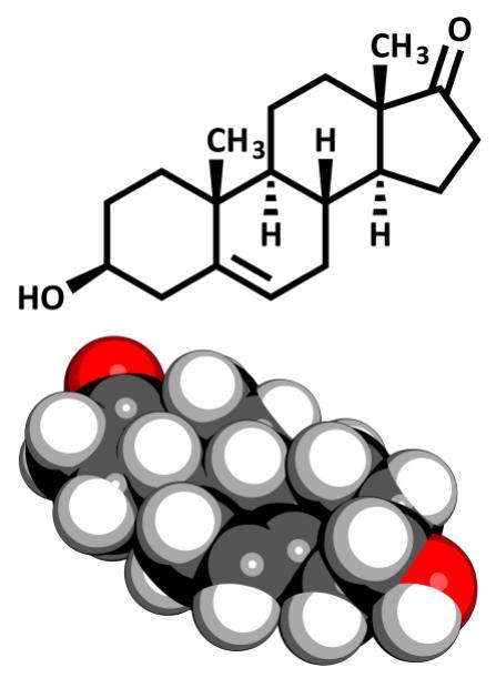 [DHEA-Moleküle]
