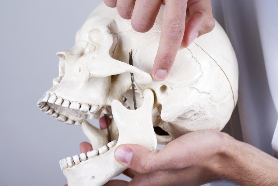Articulação temporomandibular em um crânio