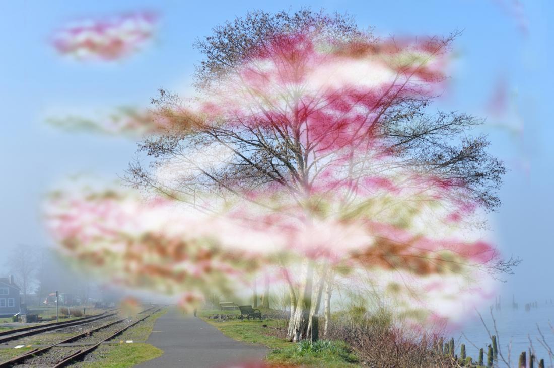 enxaqueca com representação de aura com matiz turva em torno de uma árvore