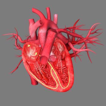 [Kan damarları ile kalp şeması]
