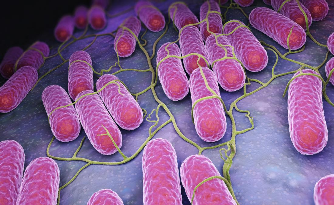 Salmonella castellanizado salmonela 1 es un género bacteriano perteneciente a la familia Enterobacteriaceae constituido por bacilos gramnegativos