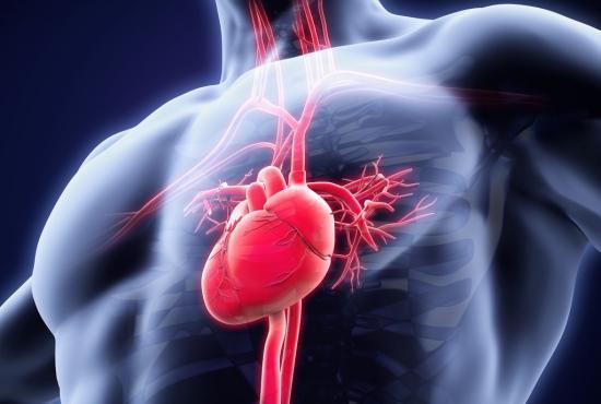Tim bao gồm hai tâm thất và hai tâm nhĩ. Nhịp tim nhanh xảy ra khi những nhịp đập quá nhanh.