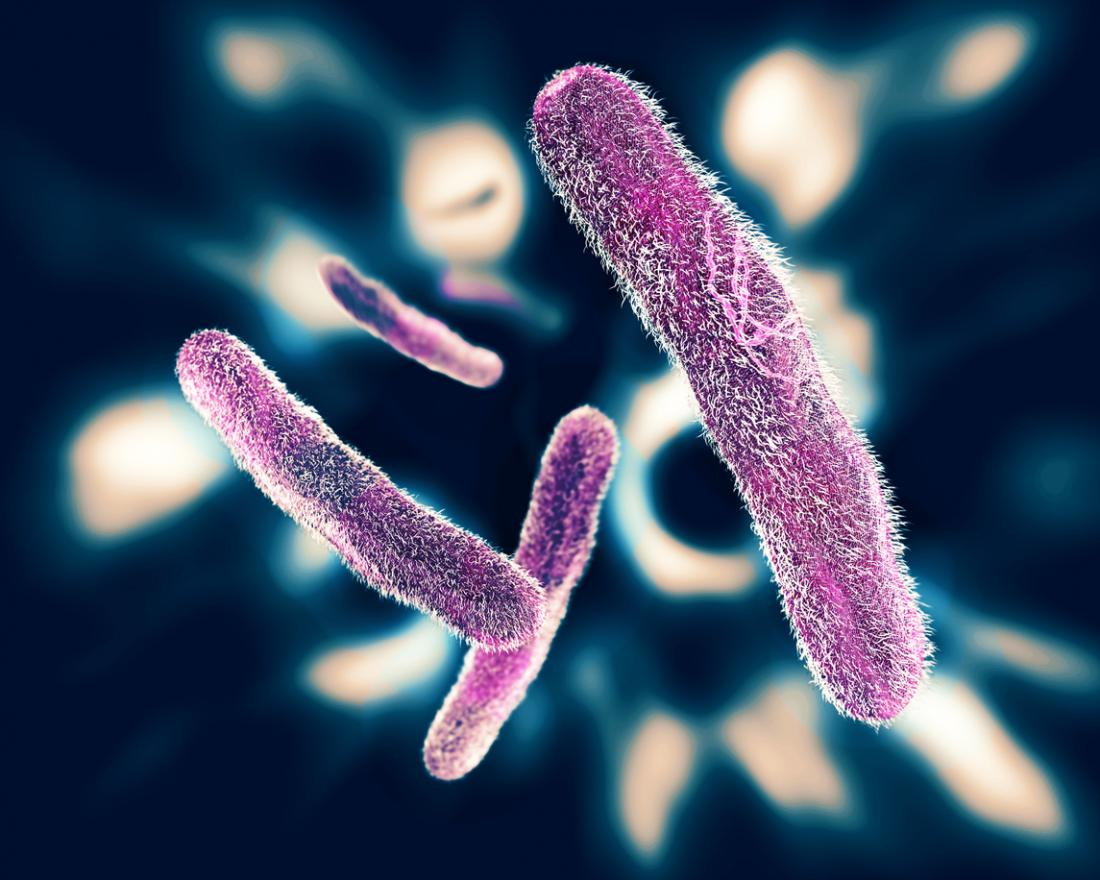 Le type le plus commun de dysenterie est causé par le bacille de Shigella.
