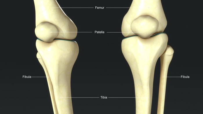 костите на краката