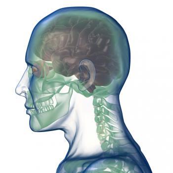 [Рентгеново на човешката глава]