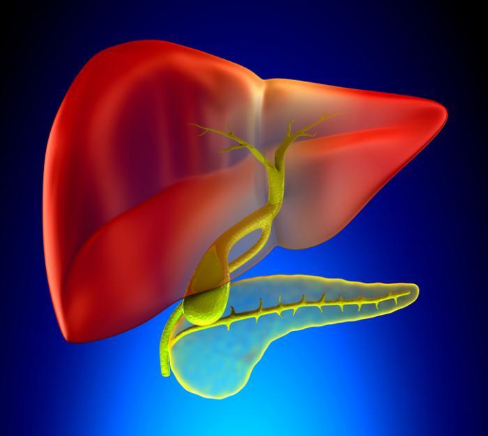 Изображение на черния дроб, жлъчния мехур и панкреаса.