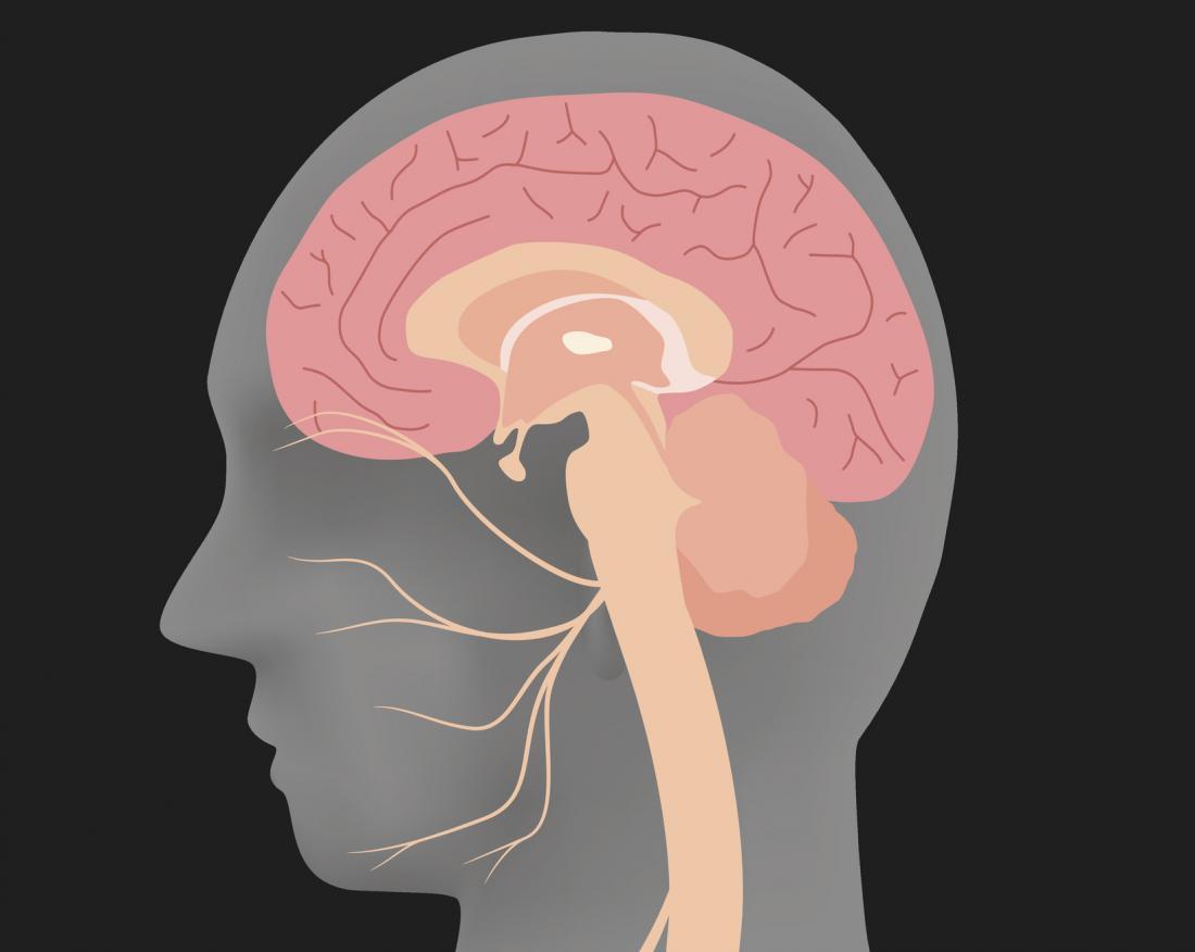 silhueta de cabeça humana mostrando o nervo facial