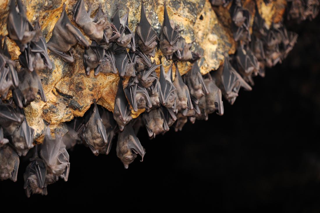 jaskinia nietoperzy