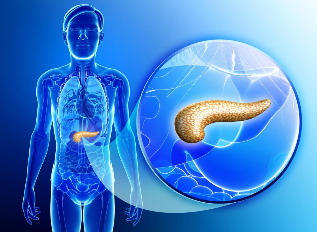 um diagrama do pâncreas
