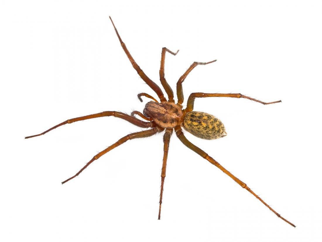 Nhện nhện trên nền trắng