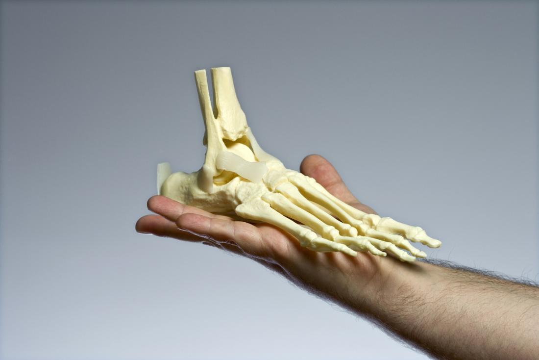 Mô hình xương ở chân được giơ lên.