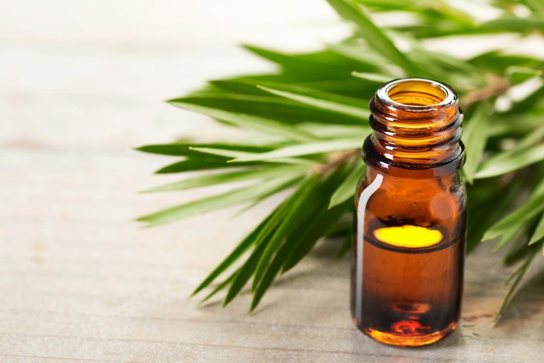 óleo de tea tree em garrafa com folhas de árvore de chá
