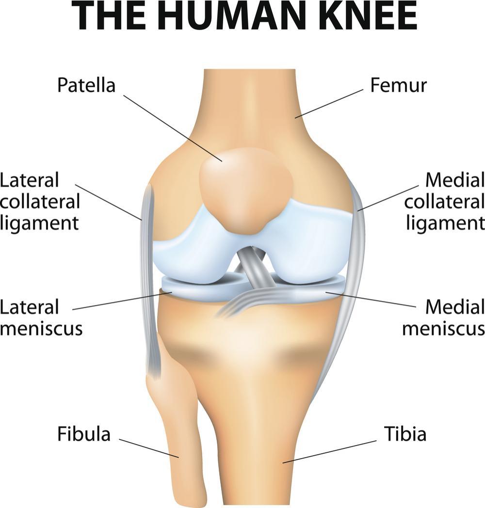 Diagrama do joelho humano