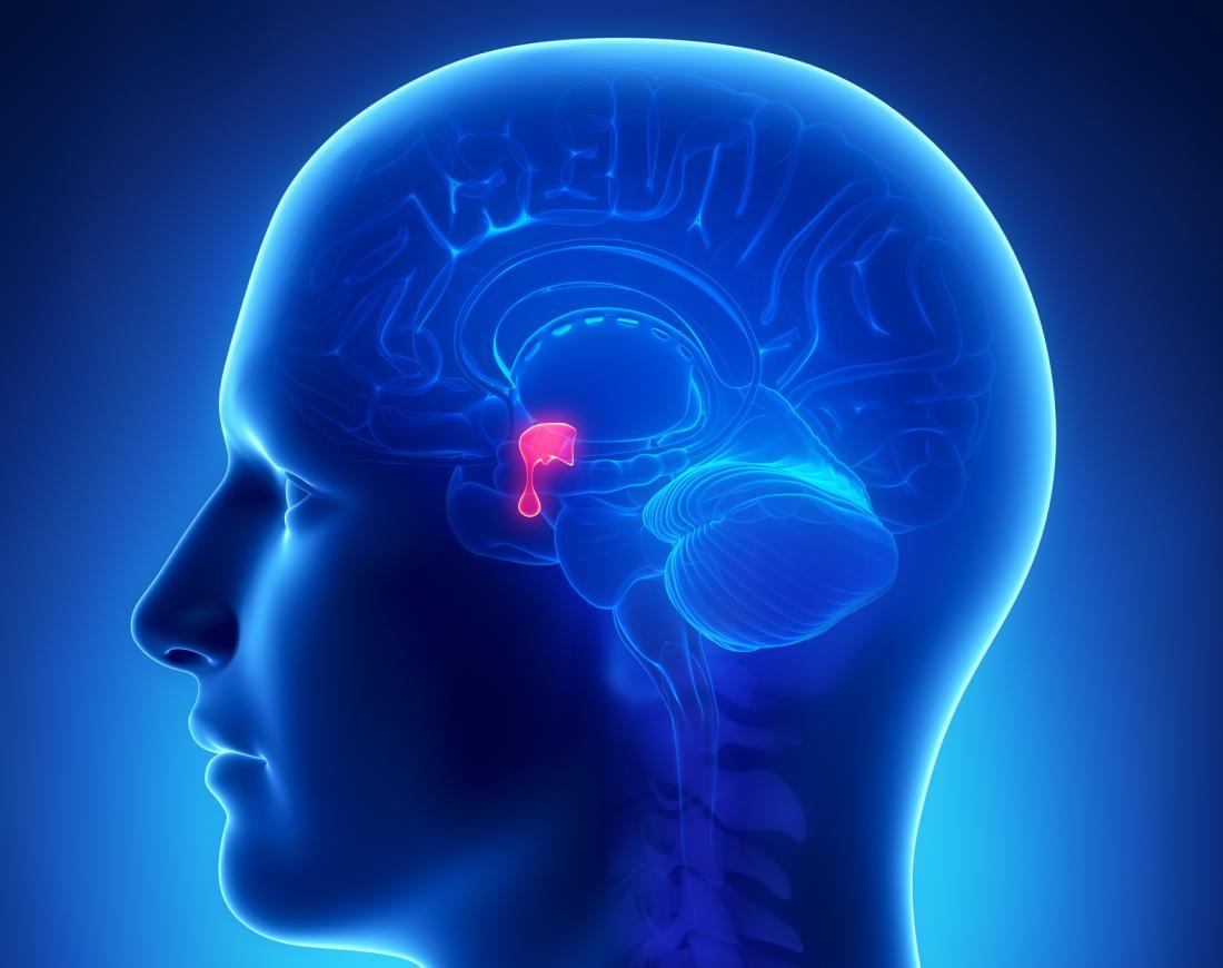 A glândula pituitária