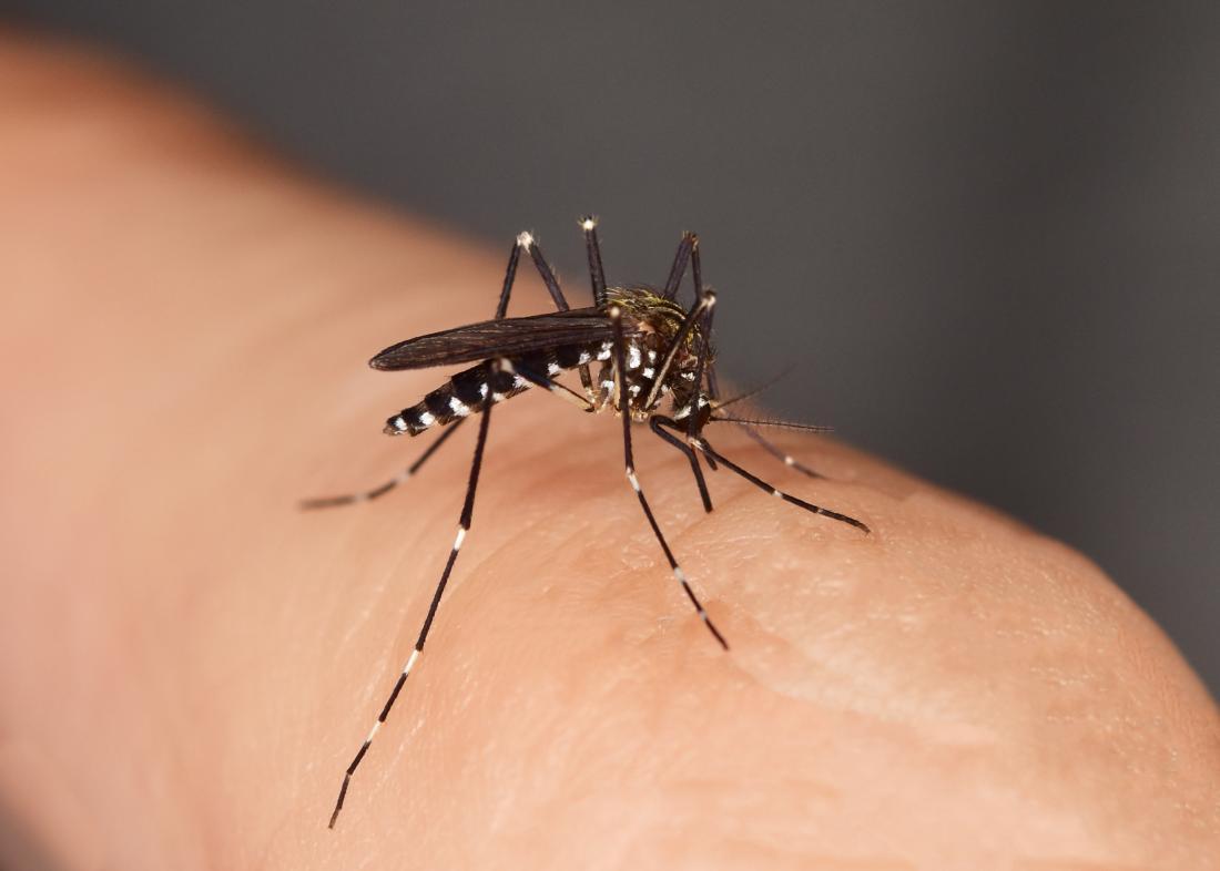 L'effet d'une piqûre d'insecte peut aller d'une légère irritation à une maladie grave.