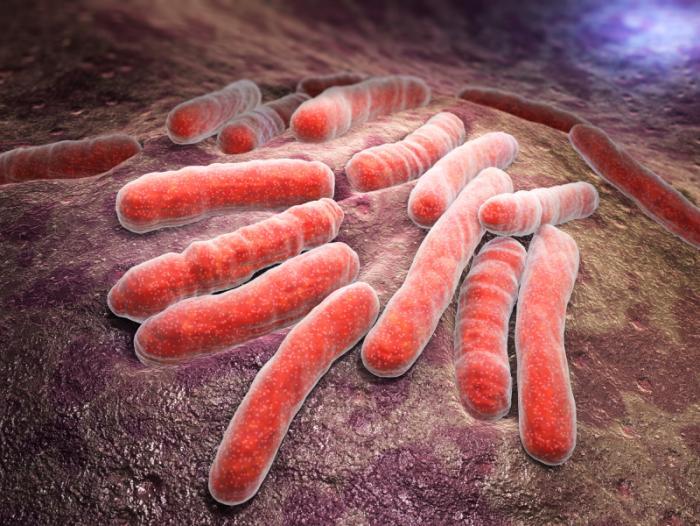 [Bactéries de la tuberculose]