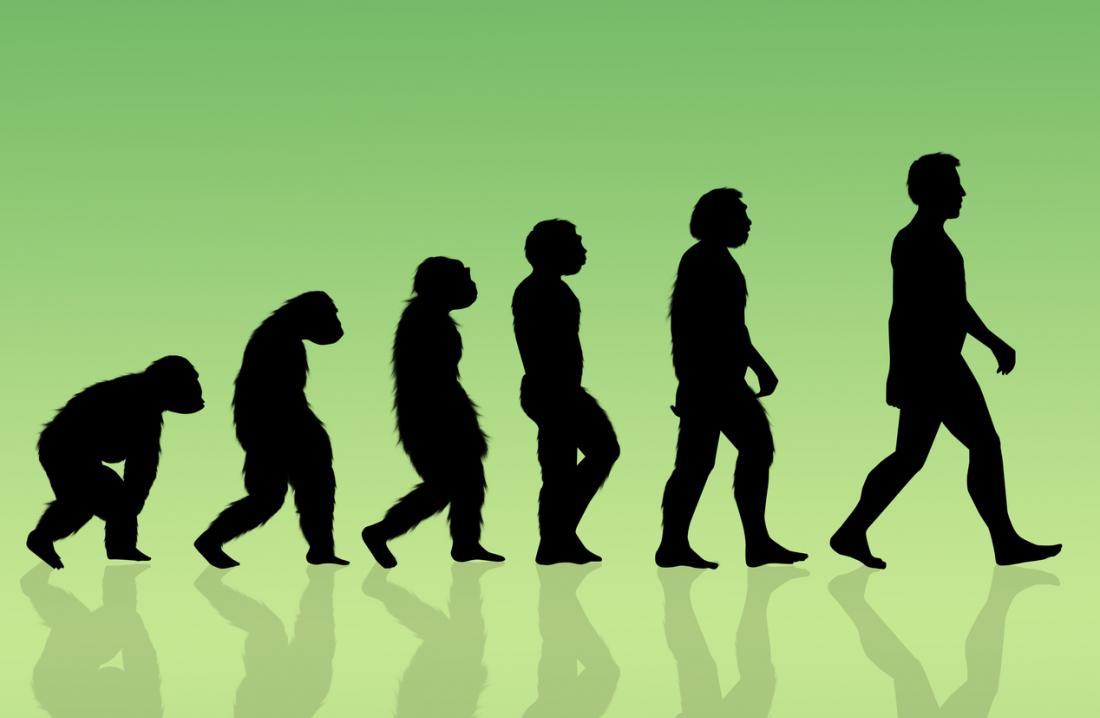 Illustration de l'évolution humaine