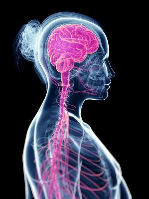Immagine del sistema nervoso.