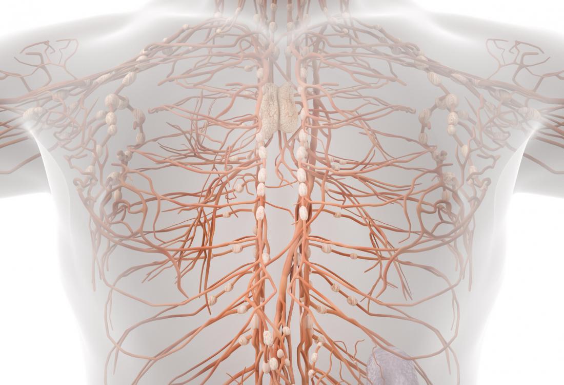 Le système lymphatique aide à éliminer les substances toxiques ou les déchets du corps. La lymphangomie est causée par un trouble du système lymphatique.