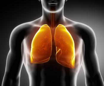 人間の肺の図。