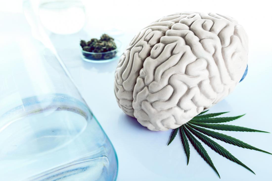 marijuana e il cervello umano