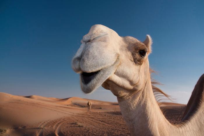 [cammello]