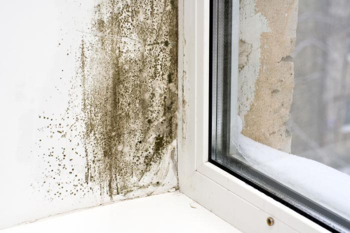 Grande pièce de moisissure noire à côté de la fenêtre.