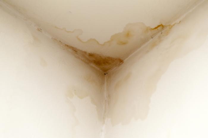 Patch humide avec de la moisissure dans le coin du plafond.