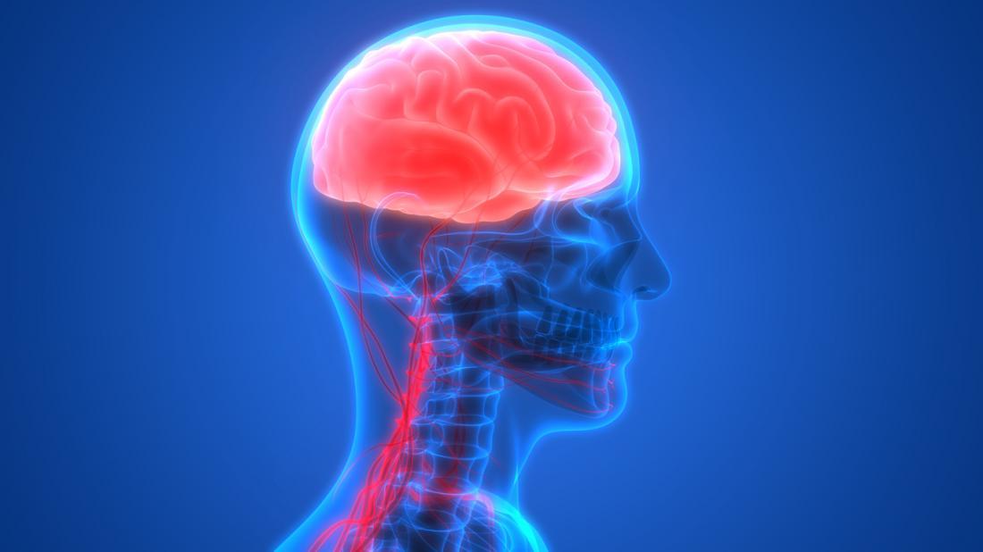 Diagramm des Gehirns und der Wirbelsäule