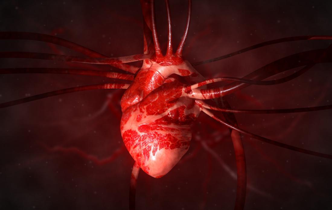diagramme de coeur humain