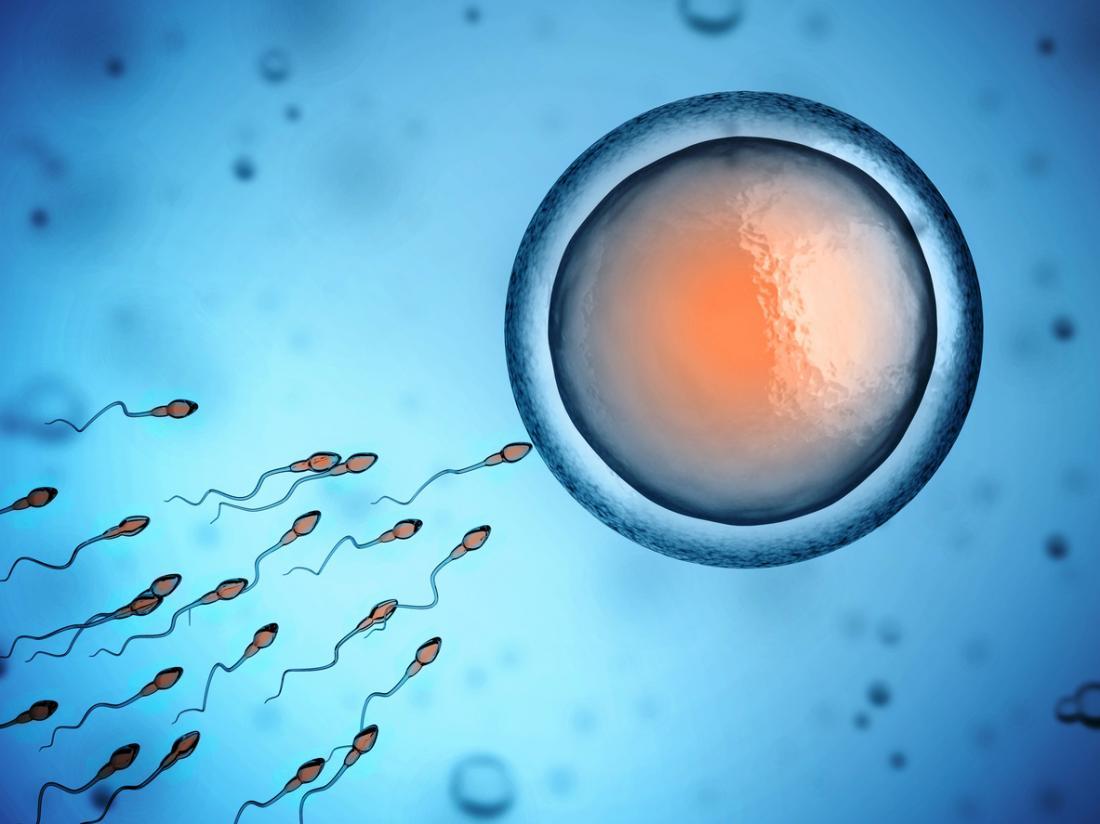 tinh trùng bơi về phía trứng